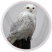 Snowy Owl In Fog Round Beach Towel