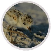 Snowy Plover On The Hunt Round Beach Towel
