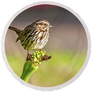Songster Perching Round Beach Towel
