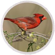 South Texas Cardinal Round Beach Towel