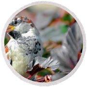 Sparrow Profile Round Beach Towel