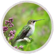 Spring Beauty Ruby Throat Hummingbird Round Beach Towel