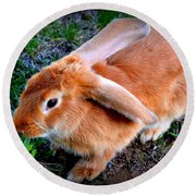 Spring The Flemish Giant Round Beach Towel