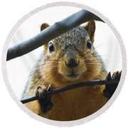 Spying Fox Squirrel Round Beach Towel