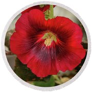 Square Red Hollyhock Round Beach Towel
