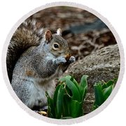 Squirrel And His Dinner Round Beach Towel