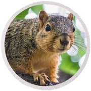Squirrel Close Up Round Beach Towel