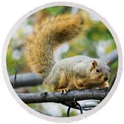 Squirrel Crouching On Tree Limb Round Beach Towel
