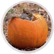 Squirrel In Pumpkin Square Round Beach Towel