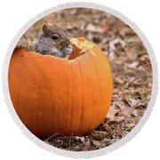 Squirrel In Pumpkin Round Beach Towel
