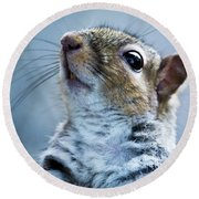 Squirrel With Nose In The Air Round Beach Towel