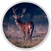 Stag Eating Round Beach Towel