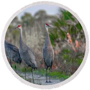Round Beach Towel featuring the photograph Standing Sandhills by Tom Claud