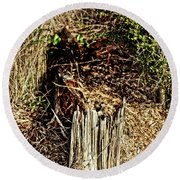 Stump In Swamp Round Beach Towel