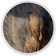 Sub-adult Yellow-billed Oxpecker On Cape Buffalo Round Beach Towel