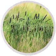 Summer Cattails In Field Of Grass - Round Beach Towel