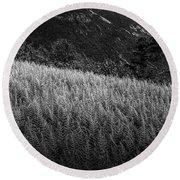 Round Beach Towel featuring the photograph Sunlight On Ferns, Mount Willard by Wayne King