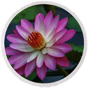 Round Beach Towel featuring the photograph Sunlit Lily by Tom Claud