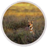 Round Beach Towel featuring the photograph Sunset Pronghorn by Pete Federico