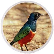 Round Beach Towel featuring the photograph Superb Starling by Kay Brewer