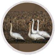 Swans Round Beach Towel