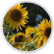 Sweet Sunflowers Round Beach Towel