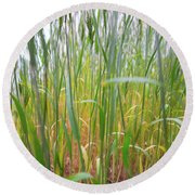 Round Beach Towel featuring the photograph Tall Grass In Herat by SR Green
