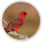 Texas Cardinal Round Beach Towel