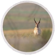 Texas Pronghorn Buck Round Beach Towel