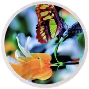 The Charm Of A Butterfly Round Beach Towel