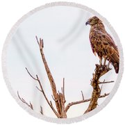 Round Beach Towel featuring the photograph The Crowned Eagle by Kay Brewer