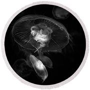 The Jellies In Black And White Round Beach Towel