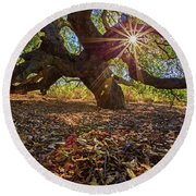 The Old Oak Round Beach Towel