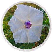 The Perfect Flower - Sacred Datura Round Beach Towel