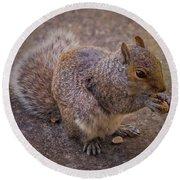 The Squirrel - Cornwall Round Beach Towel