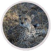 Cheetah In Repose Round Beach Towel