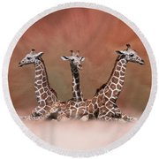 The Watchers - Three Giraffes Round Beach Towel