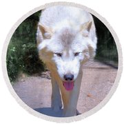 The White Wolf Round Beach Towel