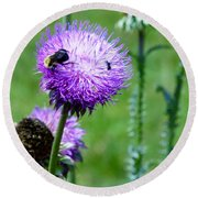 Thistle Visitors Round Beach Towel
