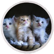 Three Little Kitties Round Beach Towel