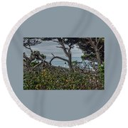 Round Beach Towel featuring the photograph Through The Foliage by Thom Zehrfeld