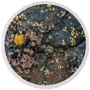 Round Beach Towel featuring the photograph Tide Pool by Sharon Seaward