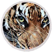 Round Beach Towel featuring the painting Tiger Eyes By Alan M Hunt by Alan M Hunt