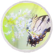 Tiger Swallowtail Butterfly On Privet Flowers Round Beach Towel