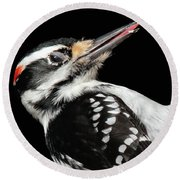 Tongue Of Woodpecker Round Beach Towel