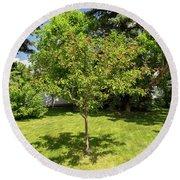 Tree In The Garden Round Beach Towel