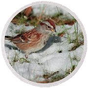 Tree Sparrow In Snow Round Beach Towel
