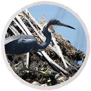Round Beach Towel featuring the photograph Tri-colored Heron 40312 by Rick Veldman