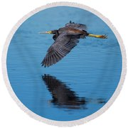 Tri-colored Heron In Flight Round Beach Towel