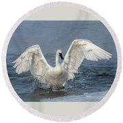 Trumpeter Swan Splash Round Beach Towel
